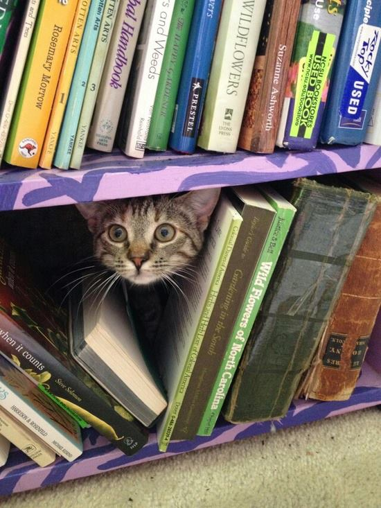 mačka i knjige